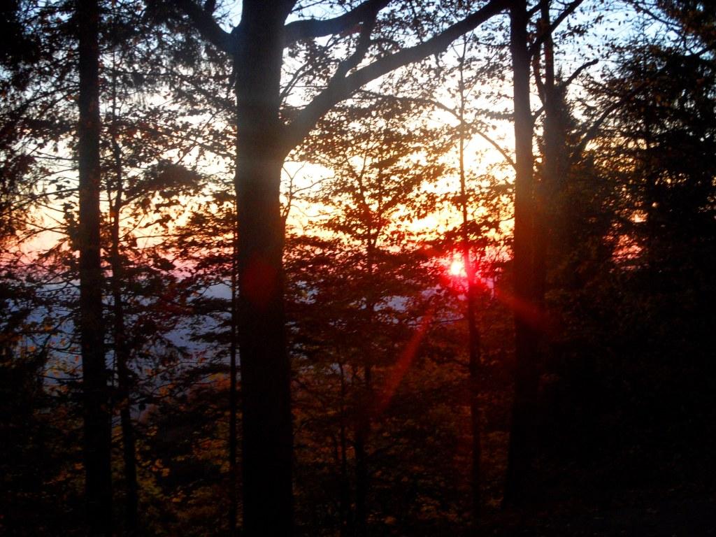 Abendsonne im bayerischen Wald